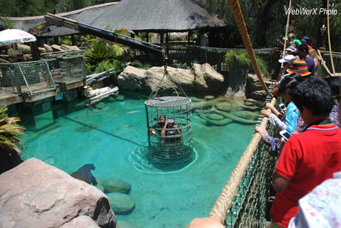 Diving with the Crocodiles at Cango Wildlife Ranch